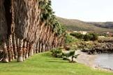 Crete, Symbolic  ceremony, The palm beach