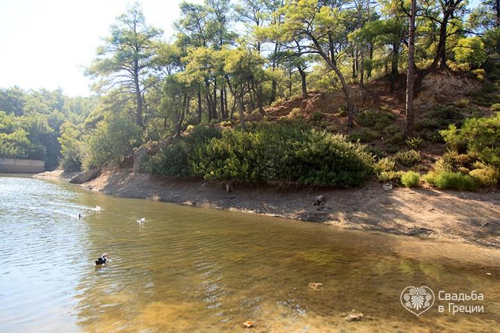 Озеро в лесу, Родос