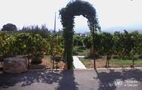 Kos, Symbolic  ceremony, Winery